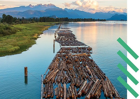 Distant mountains with logs on a river