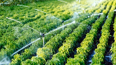 Smart cleantech irrigation systems aid cannabis cultivators