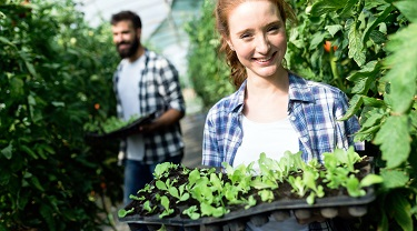 Organic farmers grow seedlings