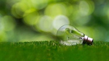Light bulb with green leaf inside rests on green grass.