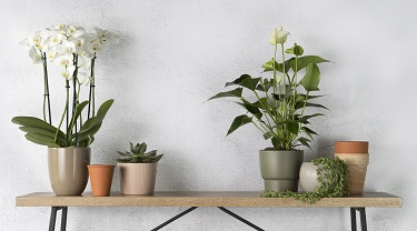 Beautiful potted orchids and other plants on a console table