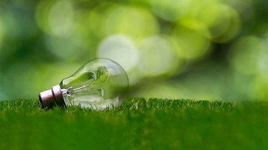A light bulb with leaves growing inside it lies in a grassy field.