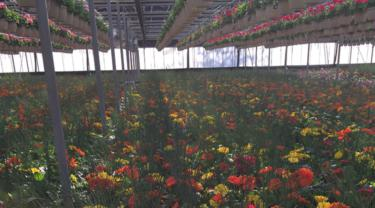 Floriculture industry exports
