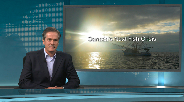 EDC Peter Hall: Canada's next fish crisis